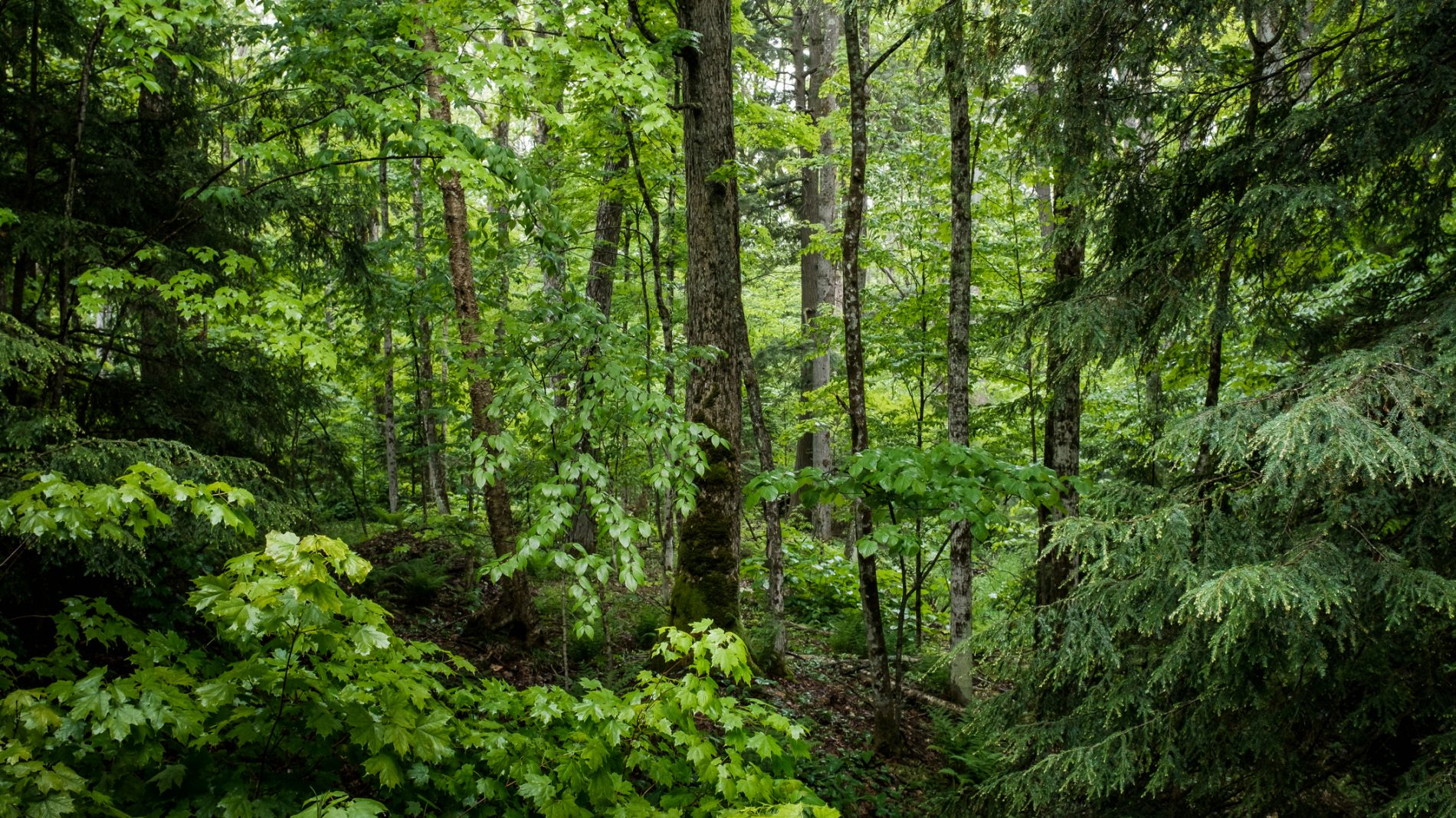 A quiet part of a forest