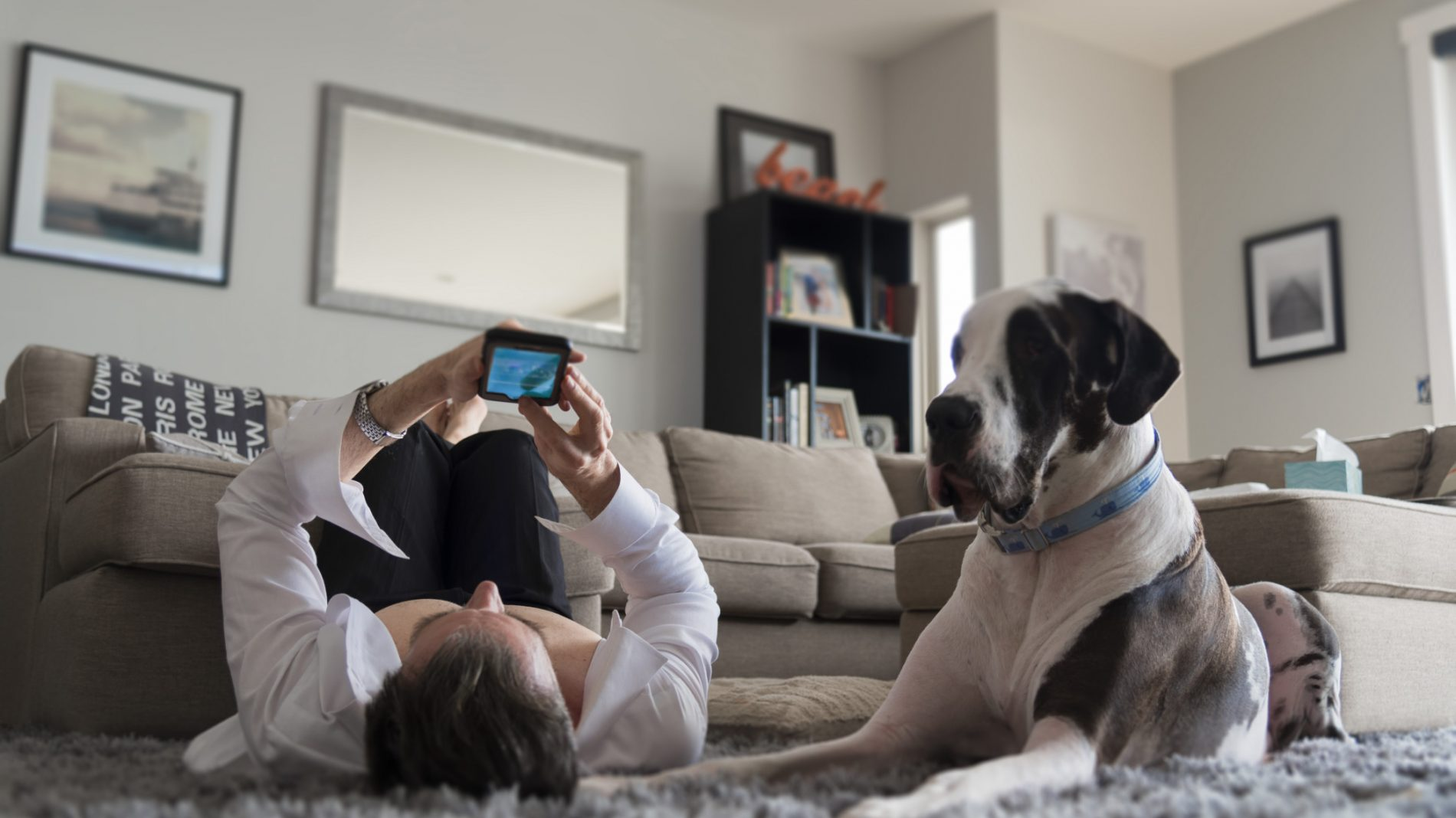 man-laying-on-home-interior-carpet-rug-using-his-smart-phone-watching-video-with-large-great-dane-dog_t20_x64b0g