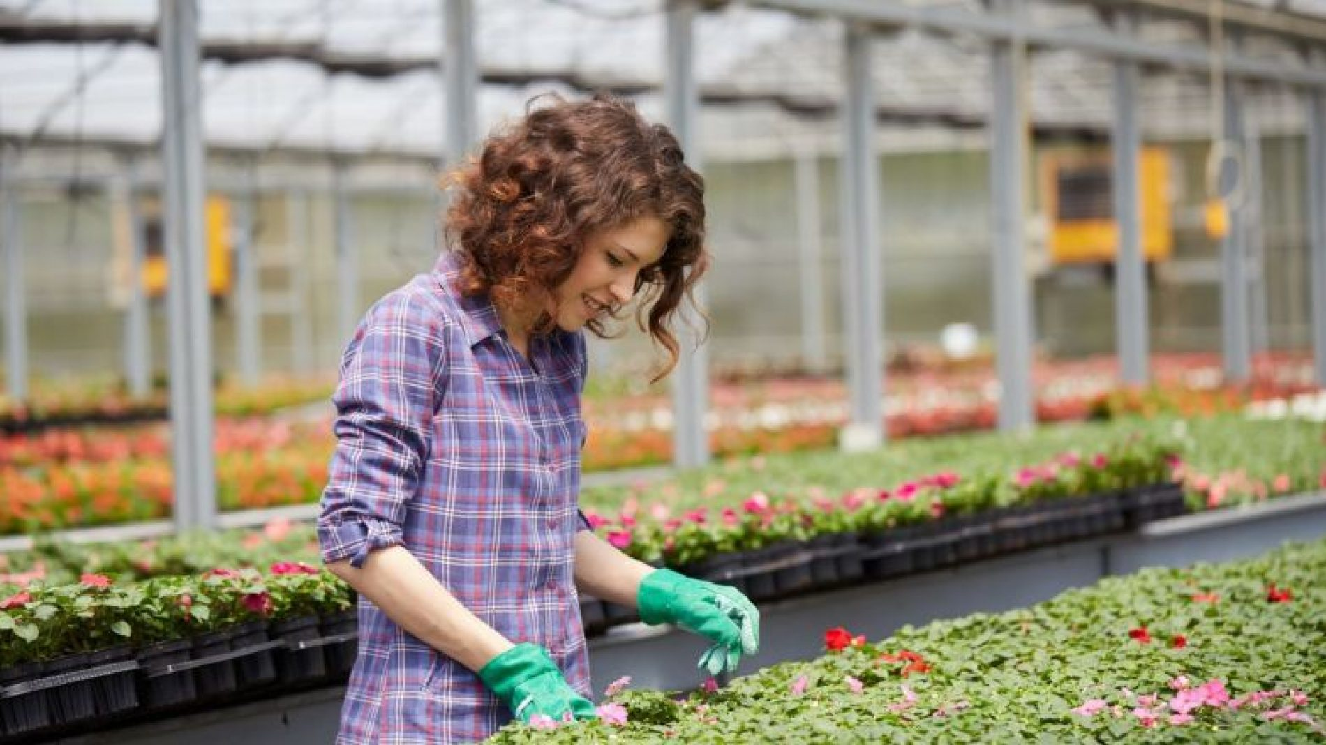 Woman working in a greenhouse