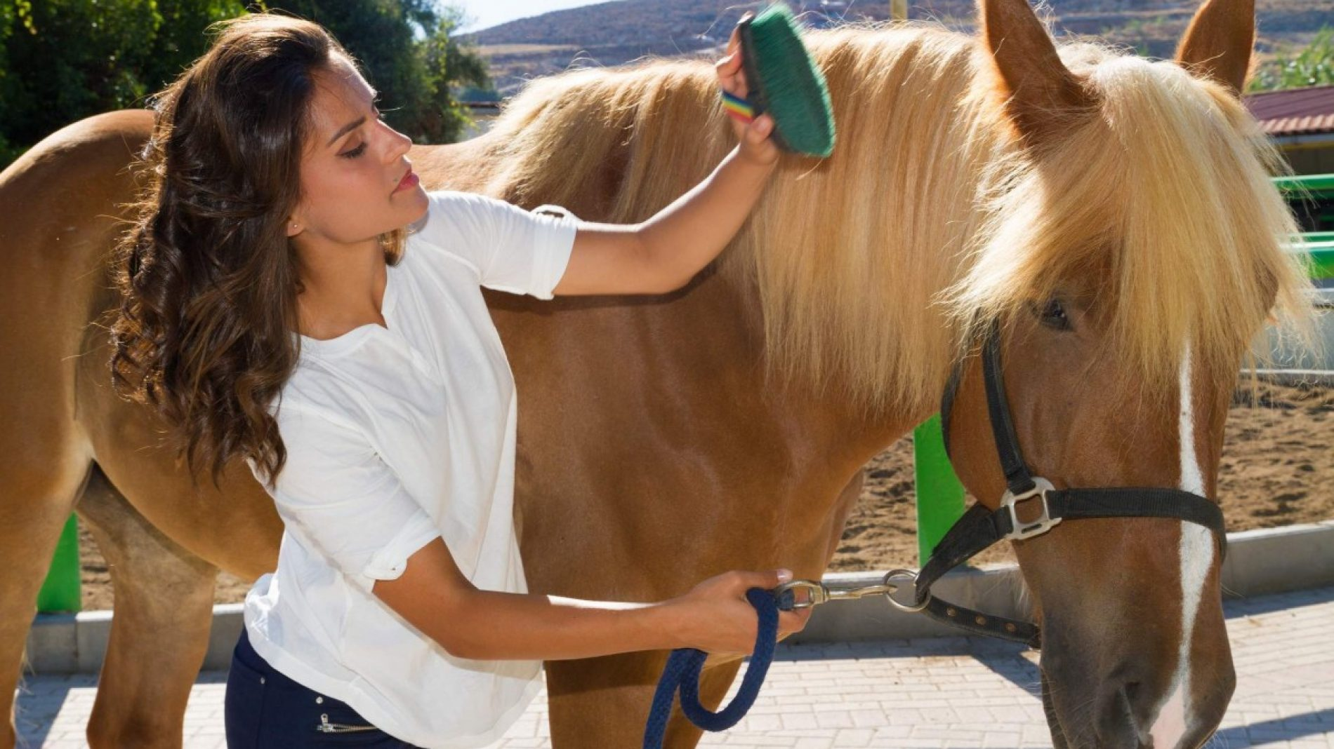 woman working with horses